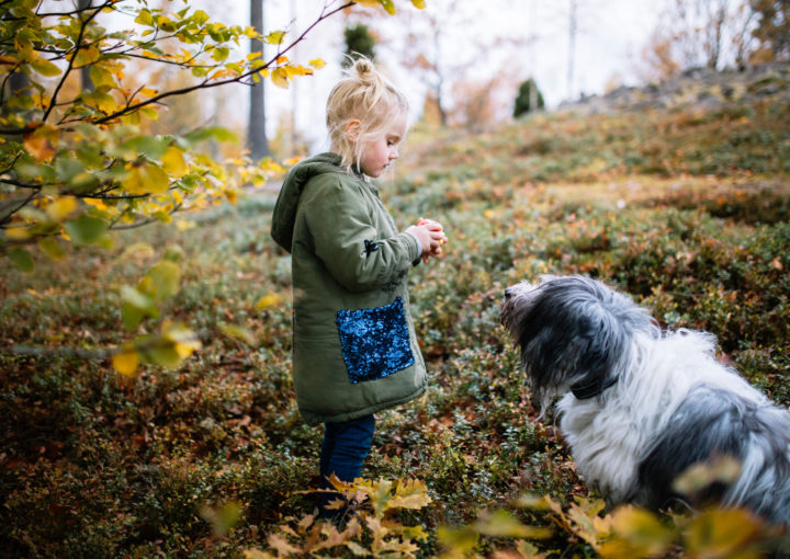 Sweden's dog culture: a story of equality and lagom All